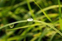 kropli deszczu Zdjęcie Royalty Free