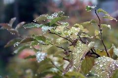 kropli deszczu pochodzenie wektora Zdjęcie Royalty Free