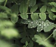 kropli deszczu pochodzenie wektora Zdjęcia Stock