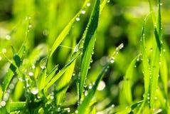 kropli trawa Obrazy Stock
