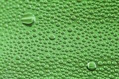 kropli zieleń Fotografia Stock