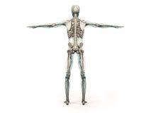 Kropp, huvud, skuldror och torso för mänsklig anatomivisningbaksida full Arkivbilder