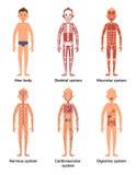 Kroppanatomi av män Nerver och muskulösa system, hjärta och andra organ göra sammandrag för knappfärger för bakgrund den blåa vek vektor illustrationer