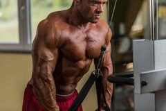 Kroppsbyggare som gör tungviktövningen för triceps med kabel Arkivfoton