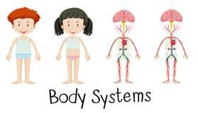 Kroppsystem av pojken och flickan vektor illustrationer