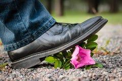 Krossa blomman royaltyfria foton