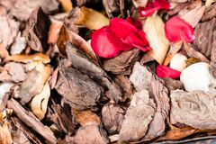 Krossad bakgrund för textur för trädskäll med höstsidor, kiselstenar och röda roskronblad för mulching för landskapgarnering Arkivbild