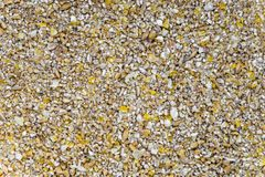 Krossade korn av torkat havre och vete royaltyfri foto