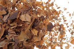 Krossade och torkade tobaksidor som bakgrund Royaltyfria Foton