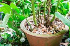 Krossat äggskal som återanvänds som naturlig organisk gödningsmedel på plan royaltyfri bild