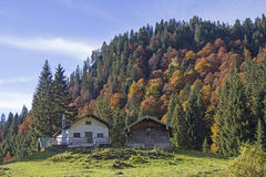Krottenalm im Brauneck-Bereich Stockfoto