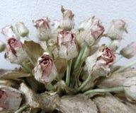 Krouik-krouik la valentine molle s'est levée du papier de SA Photos libres de droits
