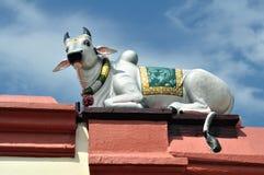 krowa święta Zdjęcie Stock