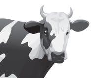 krowa Obrazy Stock