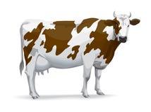 krowa ilustracja wektor