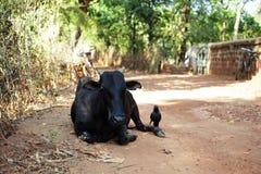 Krowa i wrona na drodze Zdjęcie Stock
