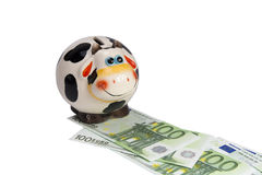 Krowa moneybox na drodze od notatek euro Fotografia Royalty Free