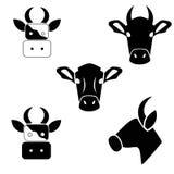 Krowa na białym tle Zdjęcia Stock