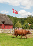 Krowa na trawie Fotografia Stock