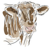 Krowa odizolowywająca na białym tle ilustracja wektor