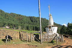 Krowa pasa blisko chorten w wsi blisko Gangtey, Bhutan Zdjęcie Stock