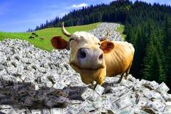 krowa pieniądze Obrazy Royalty Free