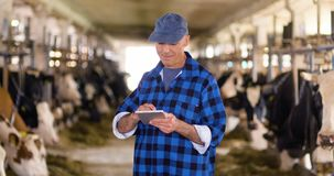 Krowa rozpłodnik sprawdza na bydlęciu i używa cyfrową pastylkę zdjęcie wideo