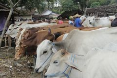 Krowa w tradycyjnym rynku Fotografia Royalty Free