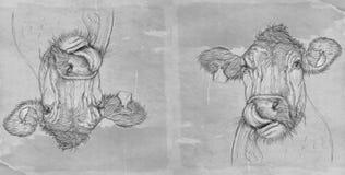 Krowa z antyk bazą ilustracja wektor