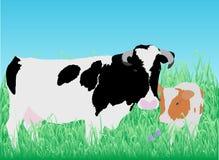 Krowa z łydką na łące Zdjęcia Royalty Free