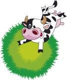 krowa zabawna Zdjęcia Stock