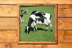 krowy łąkowy widok okno drewniany obraz stock