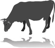 Krowy łasowanie Fotografia Royalty Free