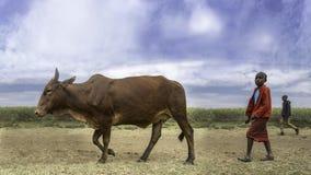 Krowy chłopiec Obrazy Royalty Free
