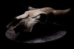 Krowy czaszka Zdjęcia Royalty Free