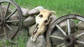 Krowy czaszka, koński fracht toczy i kamienie w gospodarstwie rolnym, 4K zbiory wideo