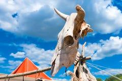 Krowy czaszka na kiju przeciw tłu niebieskie niebo Obraz Stock