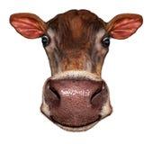 Krowy głowa Obraz Royalty Free