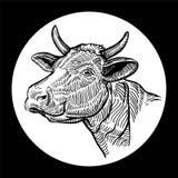 Krowy głowa Ręka rysująca w graficznym stylu pojedynczy białe tło royalty ilustracja