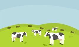 Krowy gospodarstwo rolne w obszarze trawiastym Fotografia Royalty Free