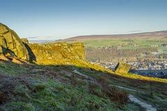 Krowy i łydki skały Ilkley Zachodni - Yorkshire Zdjęcie Stock