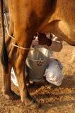 krowy mleko Fotografia Royalty Free