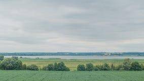Krowy pasa na zielenieją śródpolnego pobliskiego dużego jezioro chmur pola zieleń Timelapse zbiory wideo