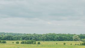 Krowy pasa na zielenieją śródpolnego pobliskiego dużego jezioro chmur pola zieleń Timelapse zbiory