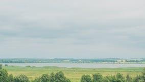 Krowy pasa na zielenieją śródpolnego pobliskiego dużego jezioro chmur pola zieleń Timelapse zdjęcie wideo