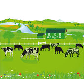 Krowy pasa w polu Obrazy Royalty Free