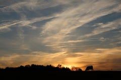 Krowy pole przy zmierzchem Fotografia Stock