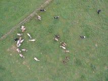 Krowy powietrzne Fotografia Royalty Free