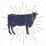 Krowy sylwetka z rocznika sunburst odizolowywającym na Białym tle wektor Fotografia Royalty Free