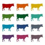 Krowy sylwetki ikony ustawiać Obraz Stock